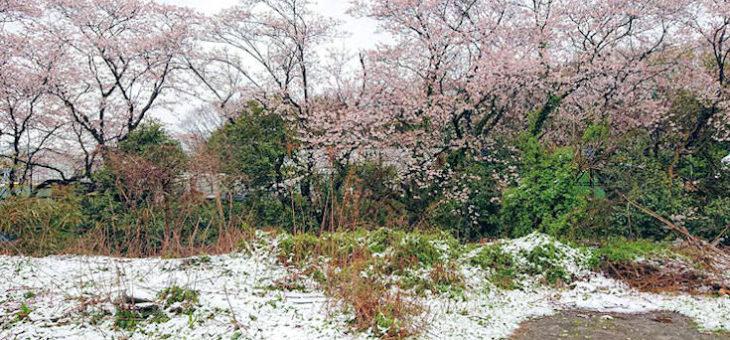 人生の春休み